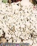 Piso em mármore branco britado