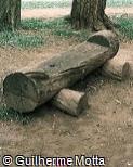 Banco em madeira bruta