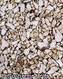 Pedra britada clara