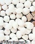Piso em mármore branco rolado