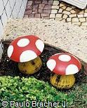 Cogumelo de madeira