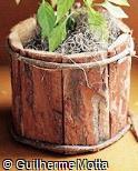 Cachepot de cascas de madeira