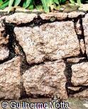 Muro Baixo com Pedras