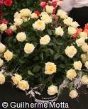 Rosa x grandiflora ´Crème de la crème´