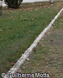 Meio-fio-concreto 100x10