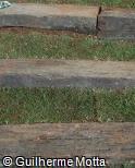 Dormentes ferroviários de madeira