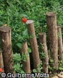 Divisor de canteiro de madeira