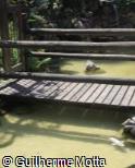 Ponte de madeira