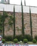 Cupressus sempervirens ´Green Pencil´