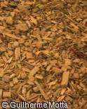 Piso de cascas de madeira